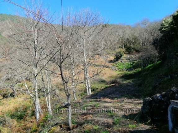 Rustic property in beautiful area and easy access in area of Pinolere, La Orotava.