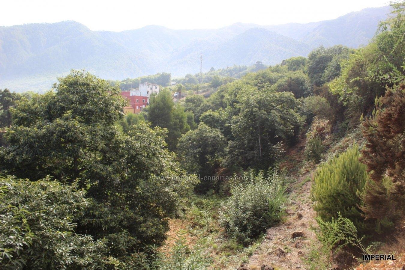 Eine regelrechte beeindruckende Traum-Finca voller Obstbäume mit fünf Strohschoberhäuschen  in der Gegend von Barroso.