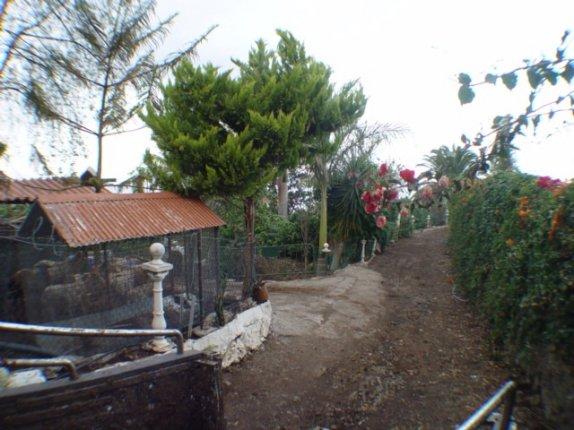 Cottage in El Rincon  -  Huge country plot in La Orotava