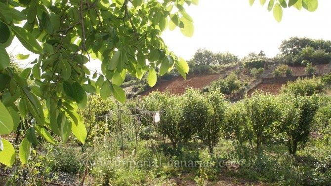 Gröses Anwesen mit mehreren Bäume obstbäume wie, Apfel, Birne, Pflaume, Orangenbäumen und andere Sorten
