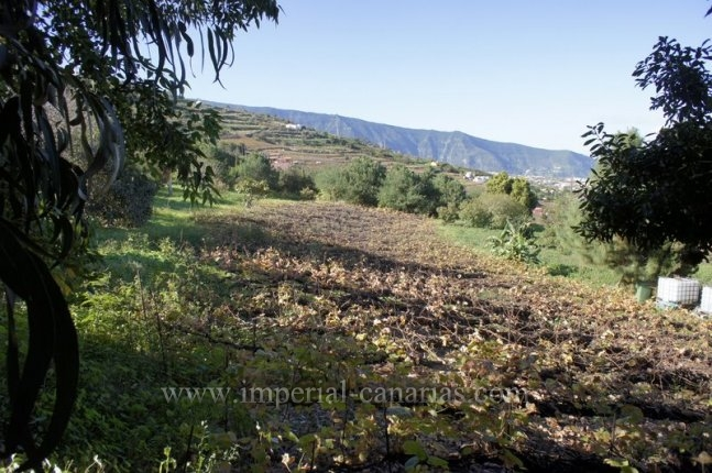 Finca in La Orotava  -  Finca mit Haus, Wein anbau und Obstbäume in La Orotava