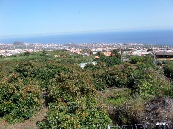 Finca in Los Pinos  -  Finca mit Bepflanzung und Verkauf von Avocados mit  schönem rustikalen Kanarischem Landhaus.